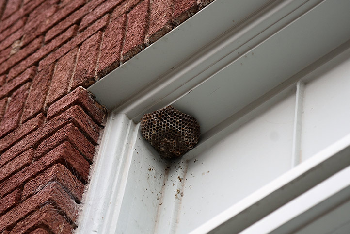 We provide a wasp nest removal service for domestic and commercial properties in Queens Park.